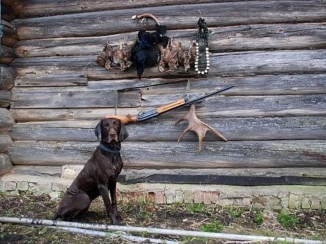 Свежие впечатления об охоте под Устюжной