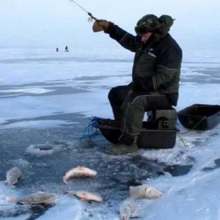 Диалоги о рыбалке №91. Ловля окуня. Зимняя рыбалка