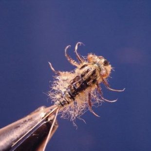 Gray Heptagenia Nymph