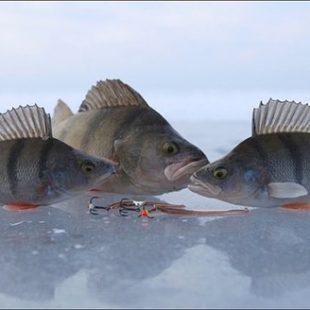 Диалоги о рыбалке №92. Ахтуба. Ловля окуня зимой. Зимняя рыбалка