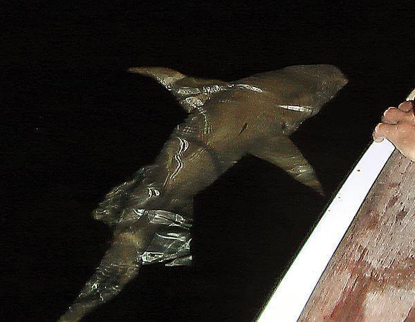 Акула по турецки