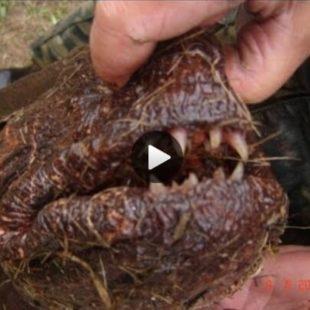 Видео о ловле черного амура осенью