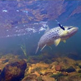 Видео о ловле ручьевой форели