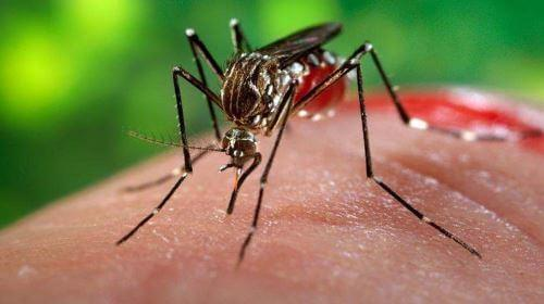 Чем обработать укус комара