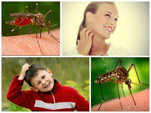 Работающие методы борьбы с комарами
