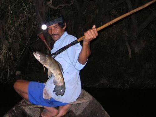 Как ловить рыбу на острогу