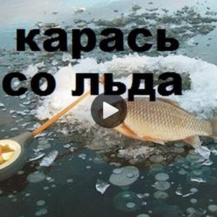 Видео о ловле карася со льда