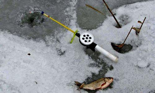 Наживка и прикормка для ловли карася зимой