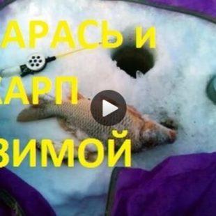 Видео о ловле карпа и карася зимой