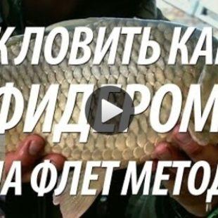 Видео о рыбалке на карпа осенью
