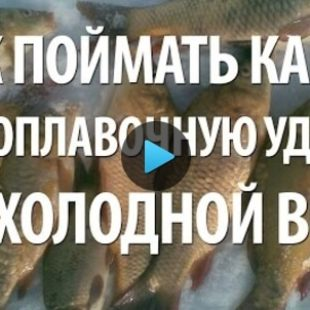 Видео о ловле карпа осенью