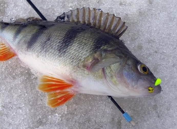 где купить fishhungry в калуге