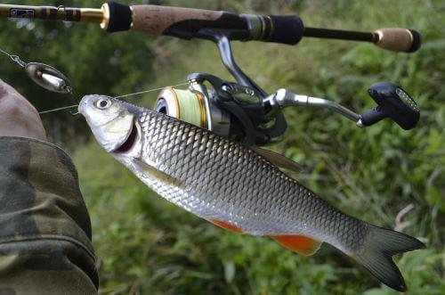 рыбалка озеро мостовое алтайский край видео