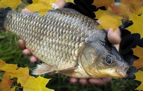 Виды ловли карася осенью