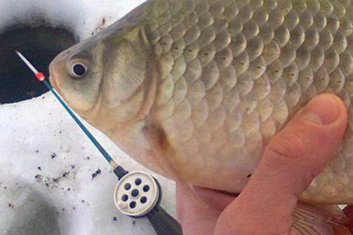 Рыбалка на карася в декабре
