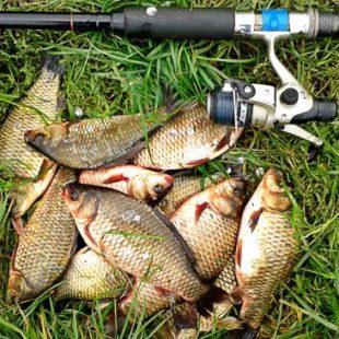 Рыбалка на карася в июне