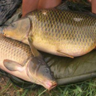 Рыбалка на большого карпа