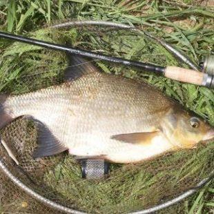 Рыбалка на леща фидером