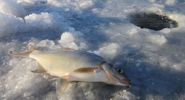 Рыбалка на леща в марте