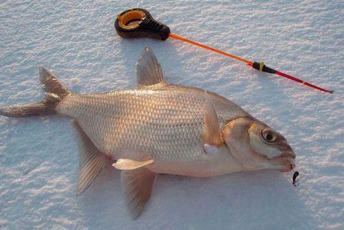 Снаряжение и одежда для рыбалки на льду