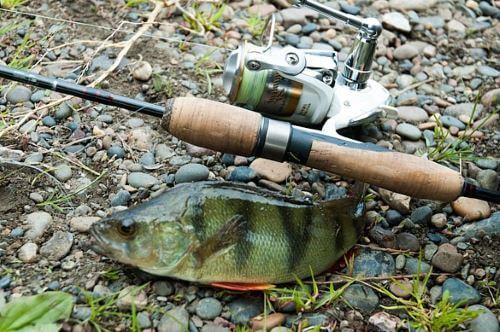 Снасти для ловли окуня на отводной поводок