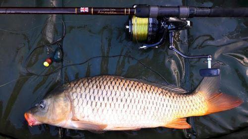 Снасти для рыбалки фидером на сазана