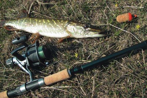 Поплавочная удочка для ловли щуки на живца