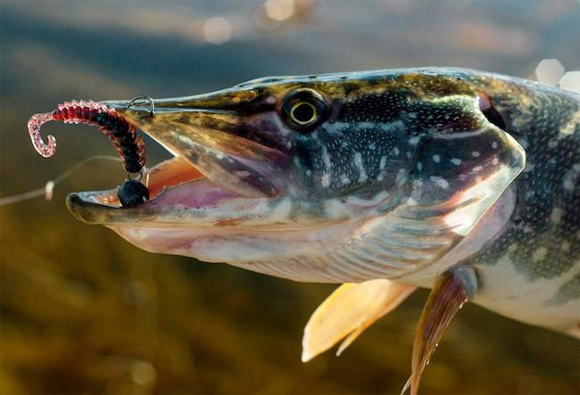 Мартовская рыбалка на щуку