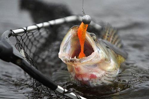 Приманки для джиговой рыбалки на судака