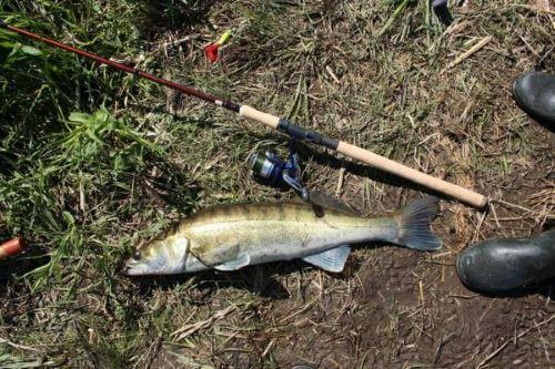 Техника и тактика рыбалки