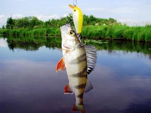 Техника рыбалки и правильная проводка