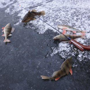 Видео о ловле на вертикалку зимой
