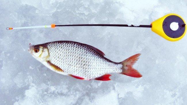 Зимняя рыбалка на красноперку