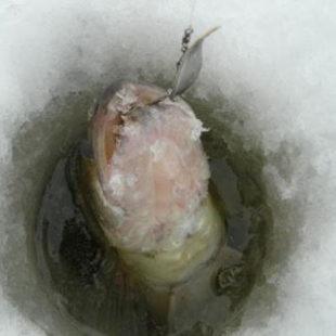 Скрытная зимняя рыбалка