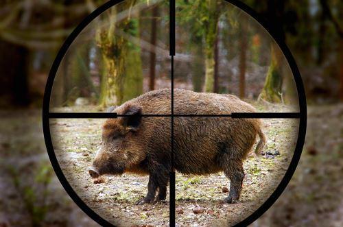 Какое выбрать оружие и снаряжение
