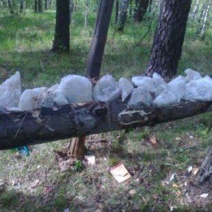 Как охотится на солонцах