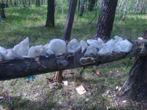 Охота на косулю на солонцах