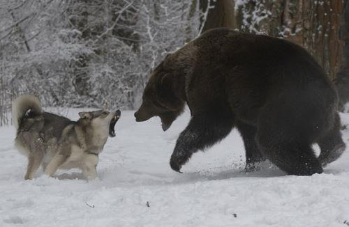 Традиционная русская охота на медведя