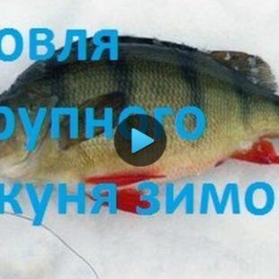 Видео о ловле окуня зимой