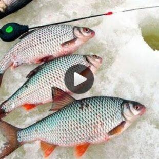 Видео о ловле плотвы зимой на реке