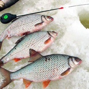 Диалоги о рыбалке №93. Ахтуба. Ловля плотвы зимой. Зимняя рыбалка