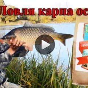 Видео о прикормке для осенней рыбалки на карпа