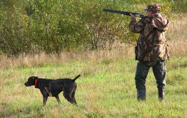Собака рядом с охотником на охоте