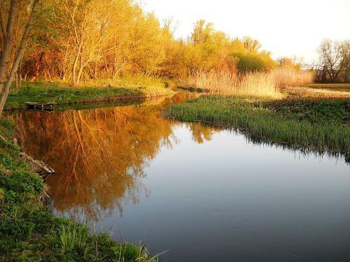 Река Бирюч