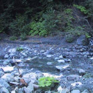 Ловля в низовье сочинских рек