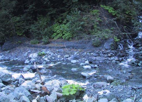 Самые массовые обитатели рек