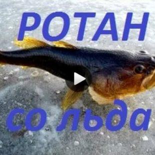 Видео о зимней ловле ротана
