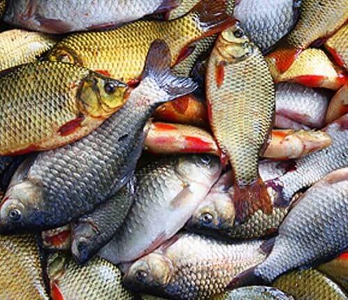 Какая рыба водится в Люберцах