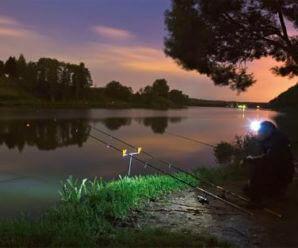 Когда лучше ехать на рыбалку днем или ночью?