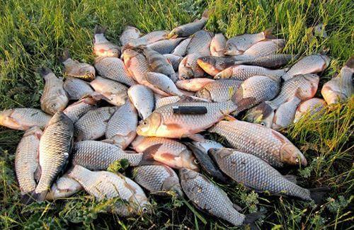 Что делать, чтобы рыба клевала